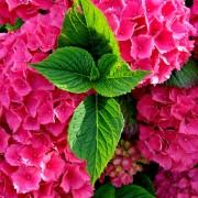 Bloemen Boerkerij appartementen – Hollum Ameland