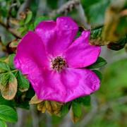 Bloemen in bloei – Ameland natuur