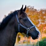 De Boerkerij – paard op het erf in Hollum. Ameland