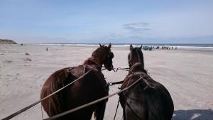 De Boerkerij - strandrit met paard en koets
