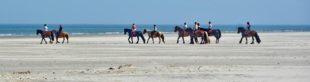 De Boerkerij - strandrit met paarden op het strand van Ameland