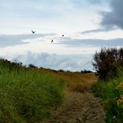 Duinlandschap Ameland – wandelpad