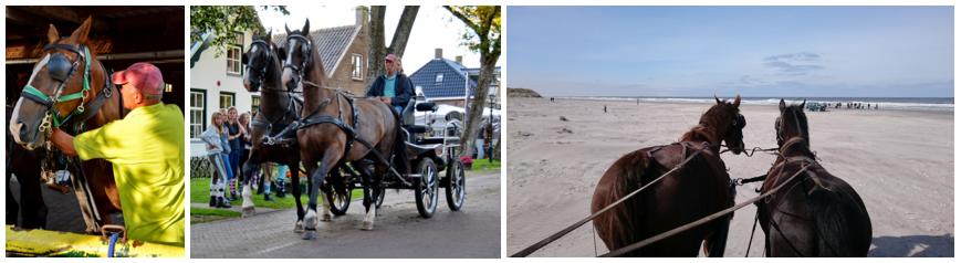 Met paard en koets - Boerkerij Hollum Ameland