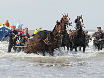 Demonstratie paardenreddingboot | Oktober 2018